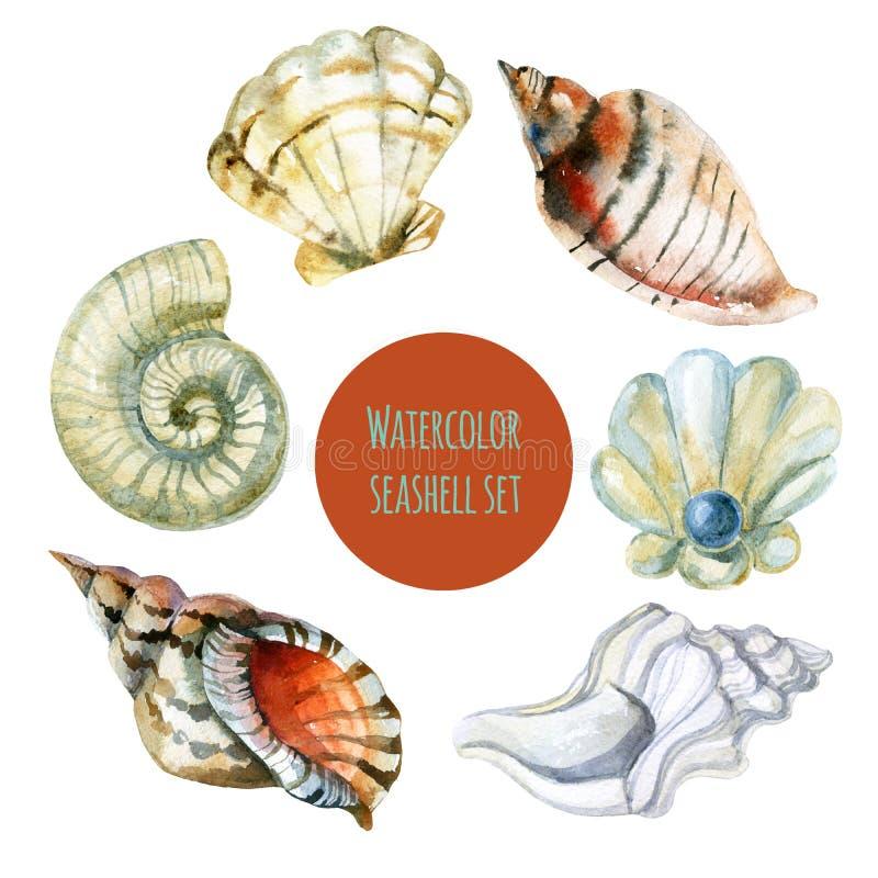 Иллюстрация акварели Seashell бесплатная иллюстрация