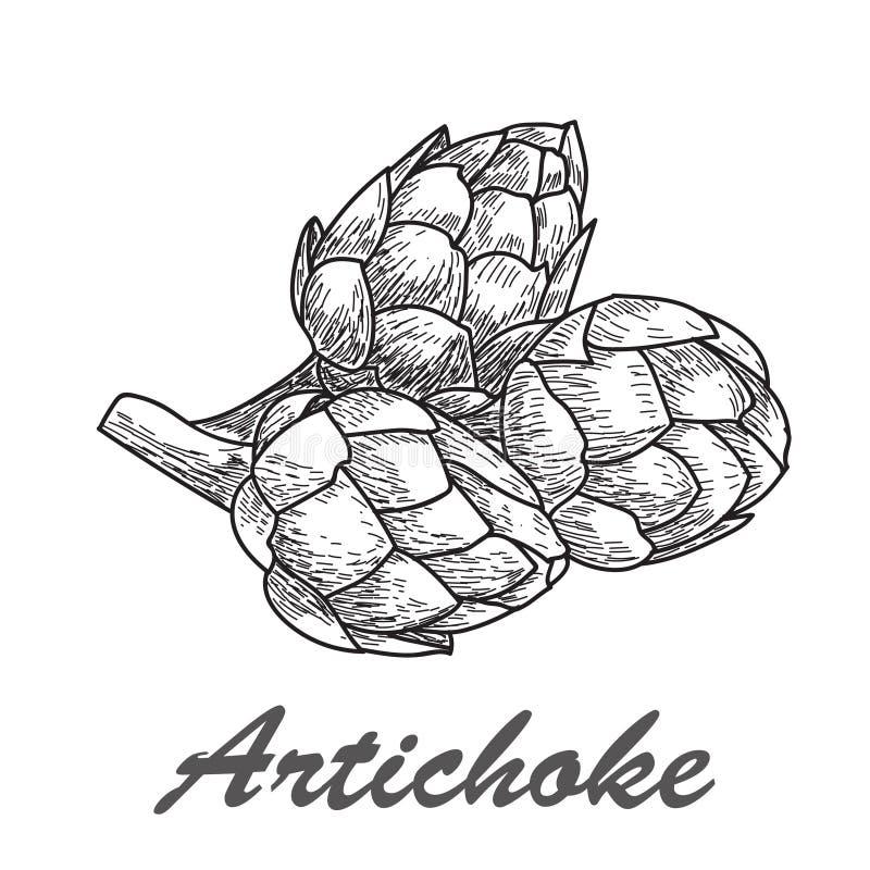 Иллюстрация артишока вектора нарисованная рукой иллюстрация штока