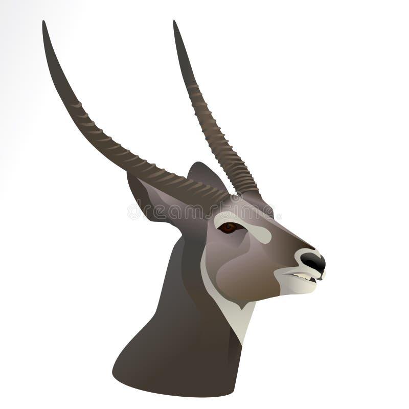 Иллюстрация вектора головы waterbuck стоковая фотография