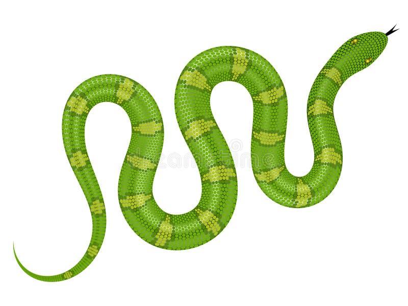 Иллюстрация вектора зеленой змейки иллюстрация вектора