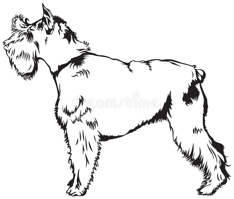 Порода собаки шнауцера иллюстрация вектора