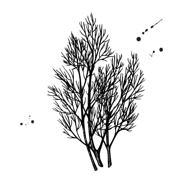 Иллюстрация вектора пука укропа нарисованная рукой объект специи иллюстрация вектора