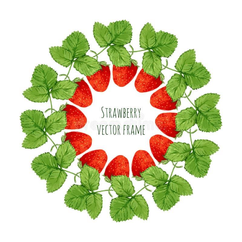 Иллюстрация вектора с рамкой клубники акварели Вручите вычерченную ягоду для рынка фермеров, травяного чая, оформления изделия ec иллюстрация штока