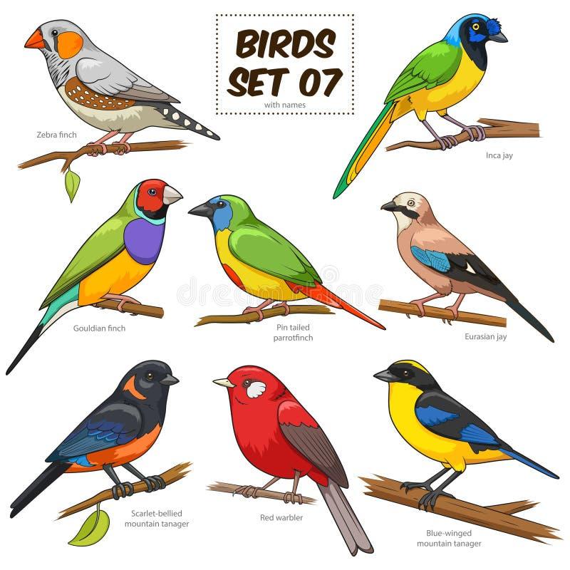 Иллюстрация вектора установленного шаржа птицы красочная бесплатная иллюстрация