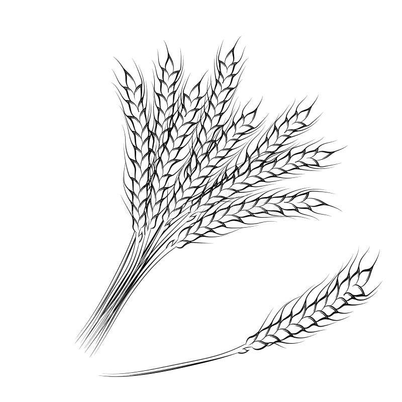 фон картинка колос пшеницы раскраска дом
