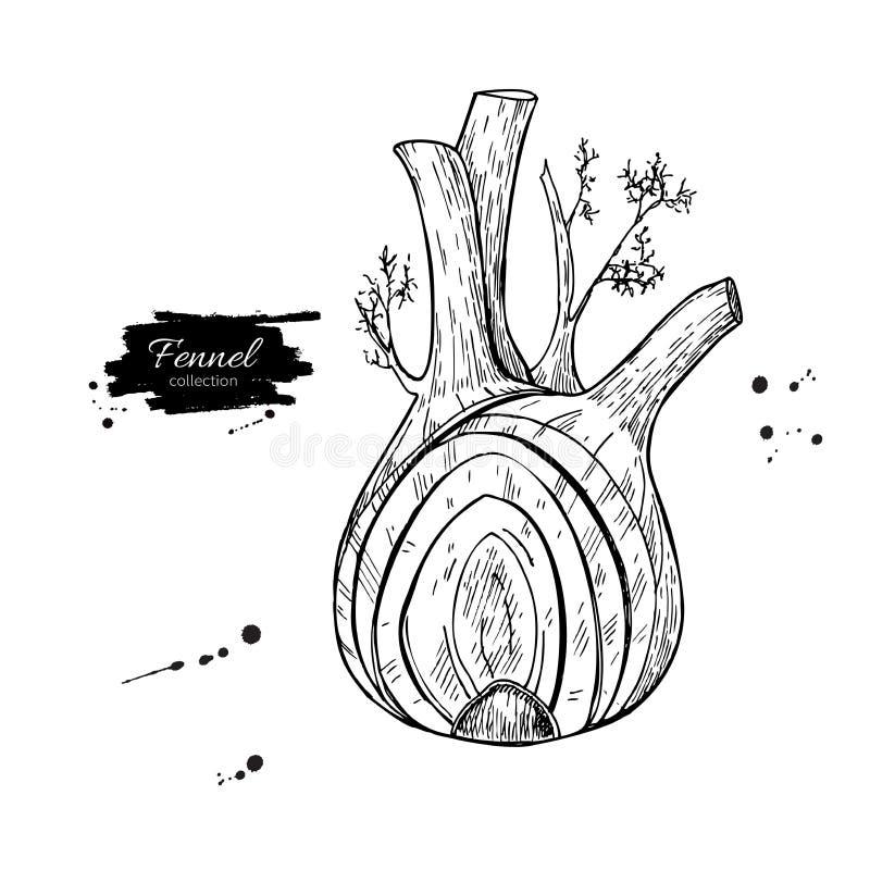Иллюстрация вектора фенхеля нарисованная рукой Изолированный овощ выгравировал объект стиля с отрезанными частями иллюстрация вектора