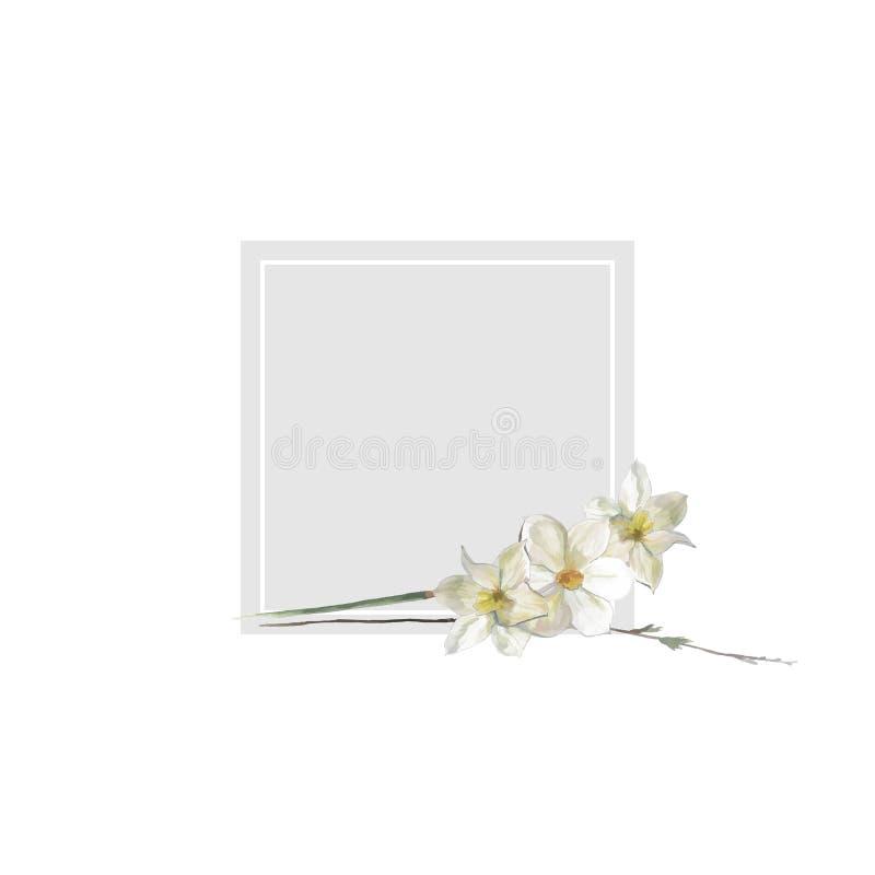 Иллюстрация вектора цветка квадрата рамки narcissus акварели стоковая фотография
