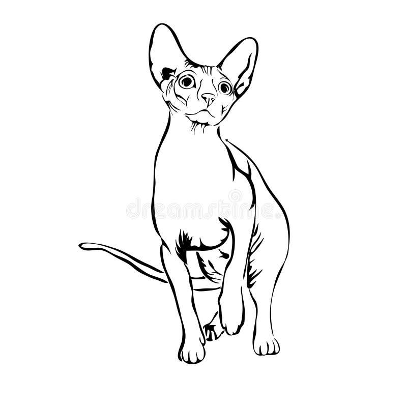 Иллюстрация вектора sphynx кота плана иллюстрация вектора