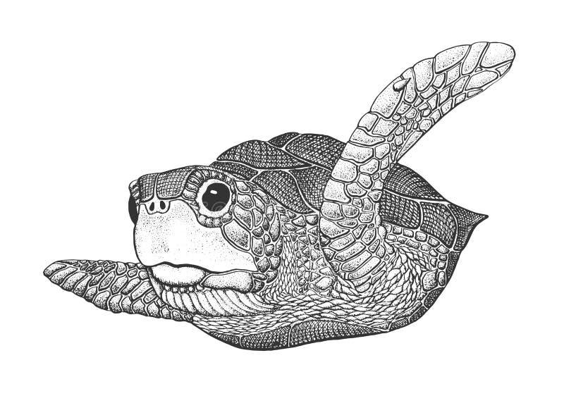 Иллюстрация гравировки морской черепахи бесплатная иллюстрация