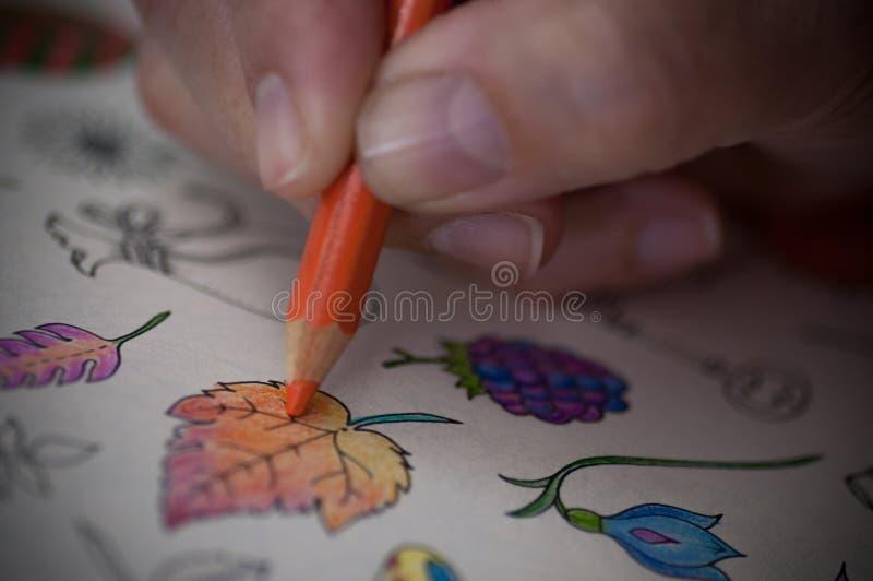 иллюстрация графика расцветки книги цветастая стоковые фотографии rf