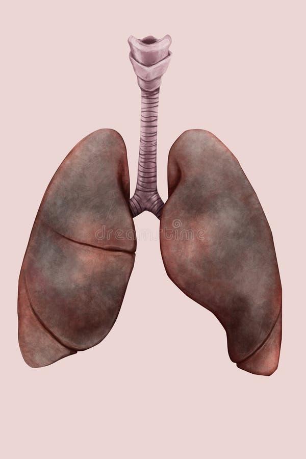 Иллюстрация легких курильщика иллюстрация вектора