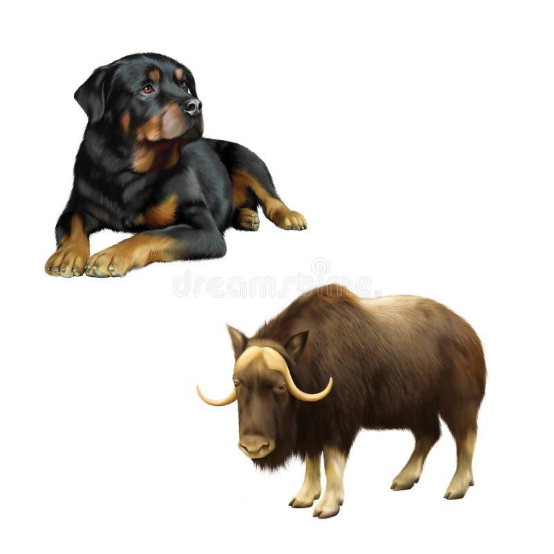 Иллюстрация мускус-вола, собаки и Rottweiler стоковое фото