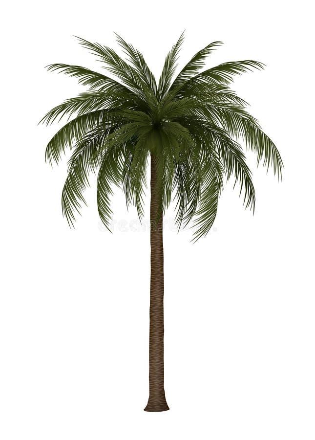 Иллюстрация пальмы иллюстрация вектора