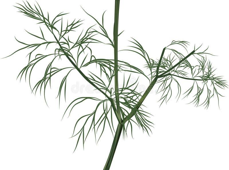 Иллюстрация при зеленый укроп изолированный на белизне иллюстрация вектора