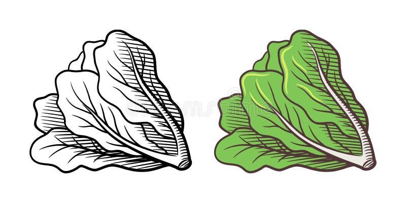 Иллюстрация салата иллюстрация вектора
