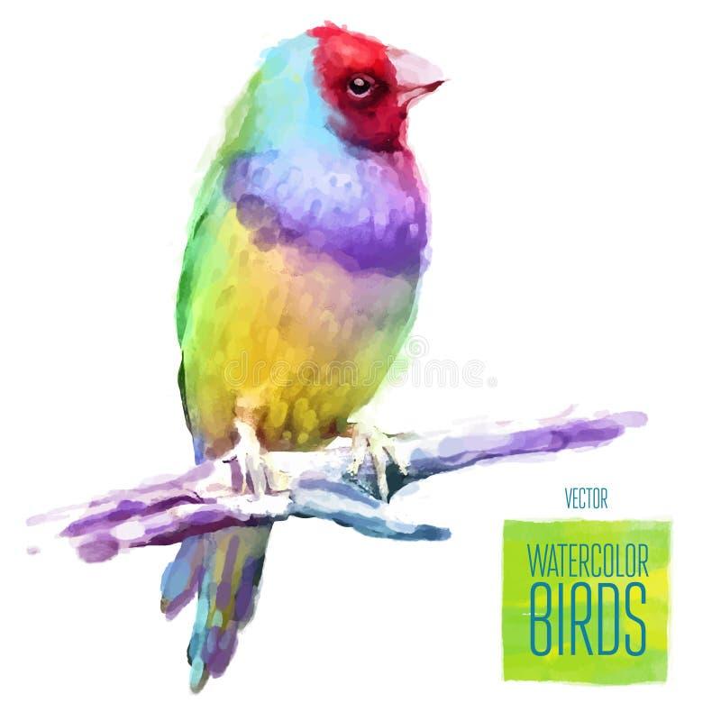 Иллюстрация стиля акварели вектора птицы иллюстрация вектора