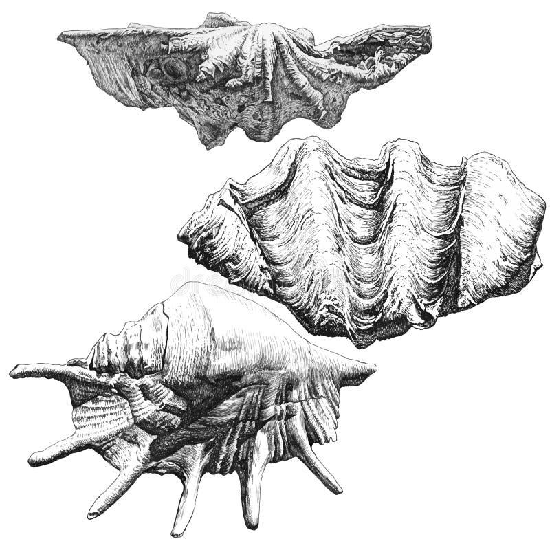 Иллюстрация с различными реалистическими seashells иллюстрация штока