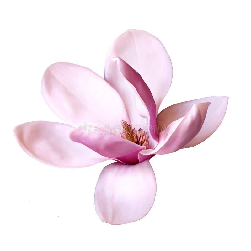 Иллюстрация цветка магнолии стоковое изображение rf