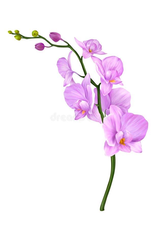 Иллюстрация цветков орхидей стоковое изображение rf