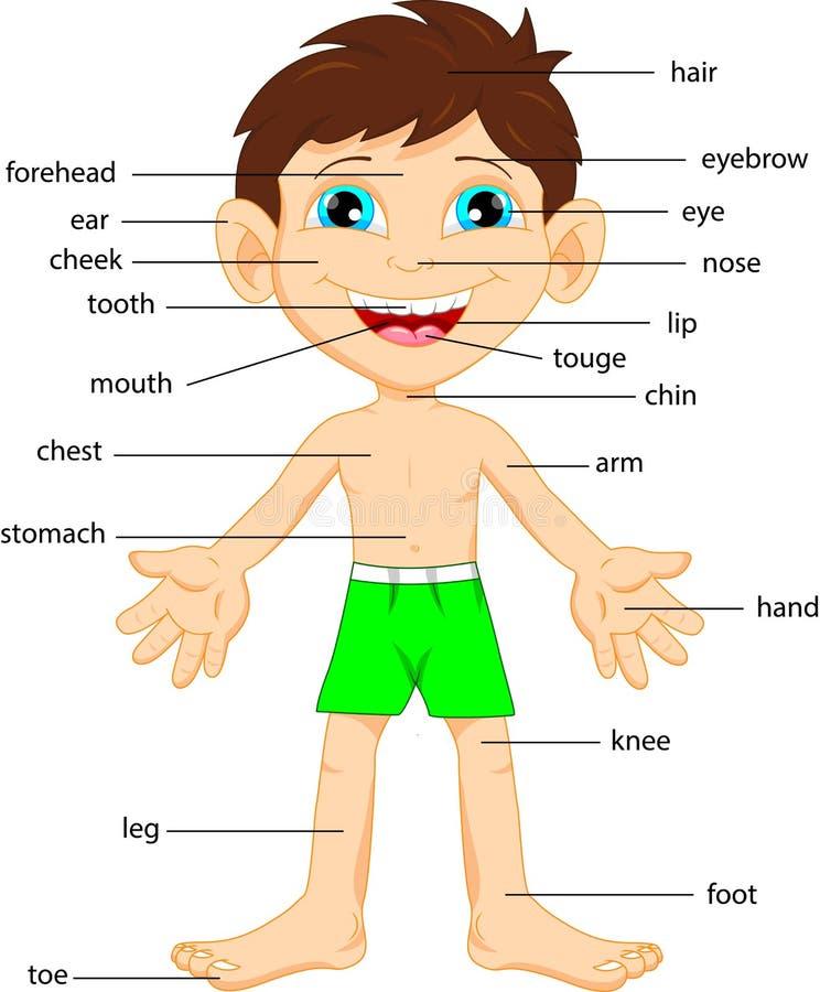 Картинки по английскому части тела