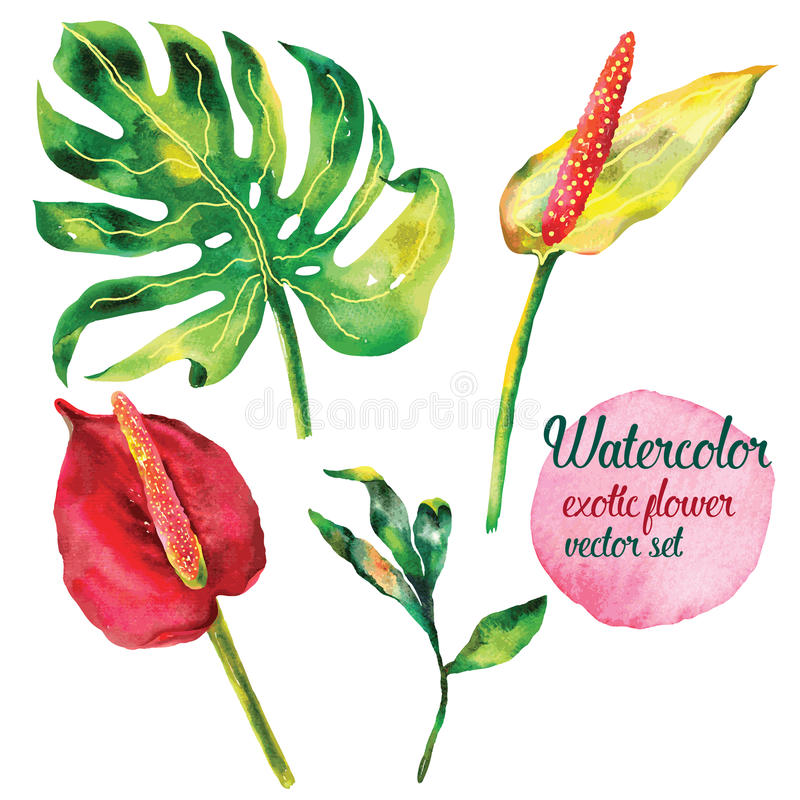 Иллюстрация экзотического вектора цветка установленная стоковое фото rf
