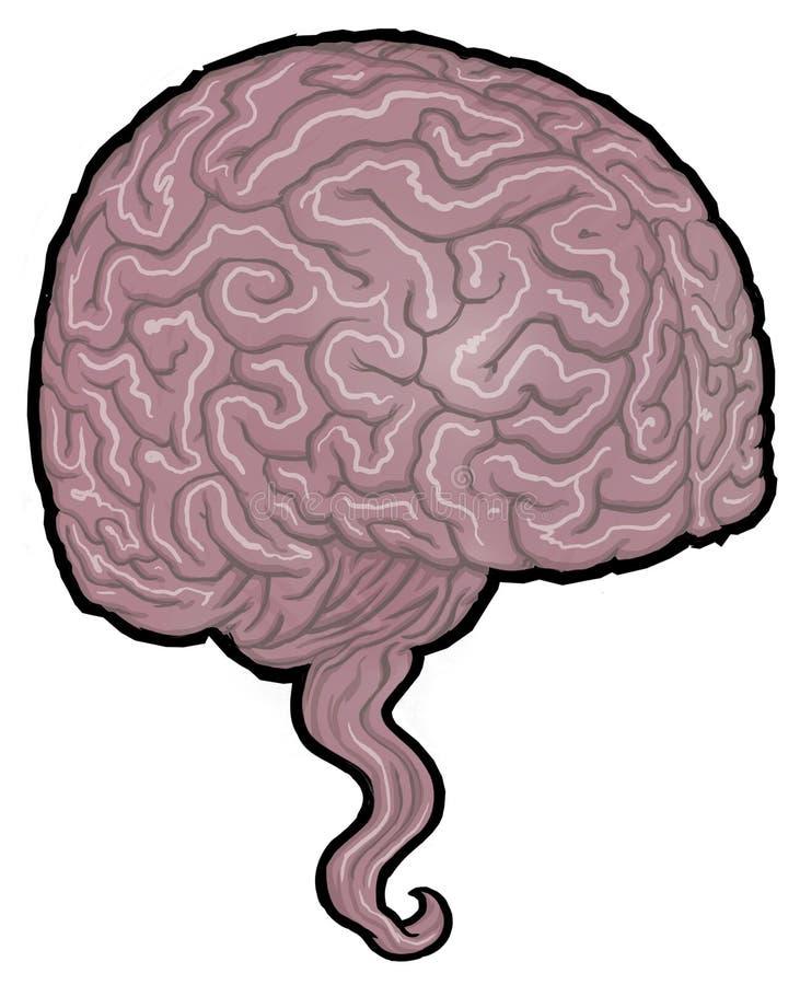 Иллюстрация людского мозга стоковые изображения rf