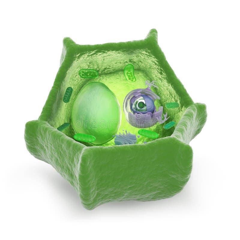 Иллюстрация cutaway клетки завода иллюстрация штока