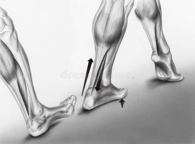 Идя забастовки ноги стоковое фото rf