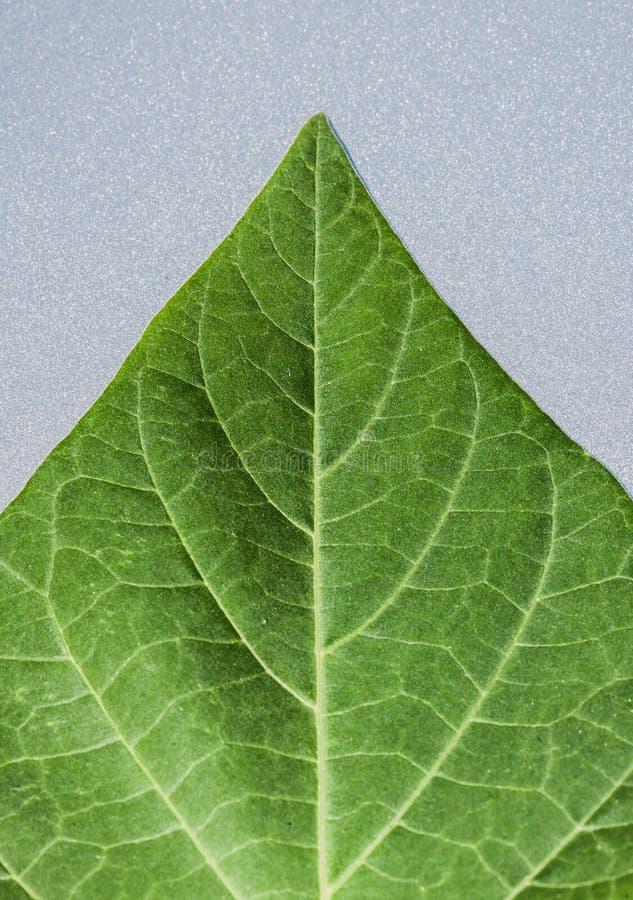 Идя зеленый цвет стоковая фотография rf
