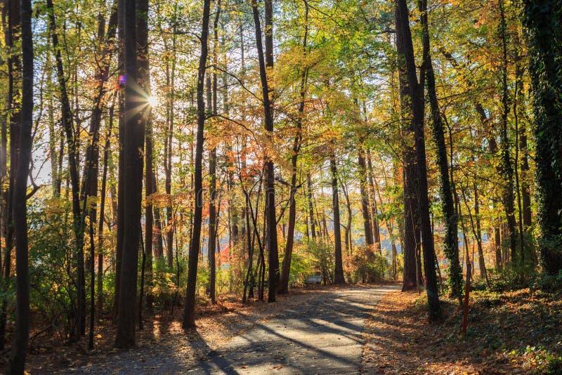 Идя путь в парке Джонсона озера Raleigh, NC стоковое фото rf