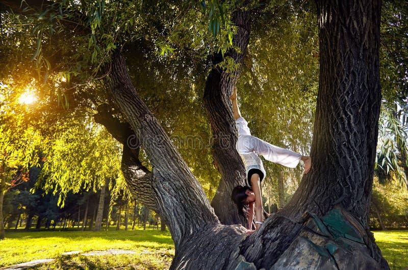 Йога на дереве стоковое изображение