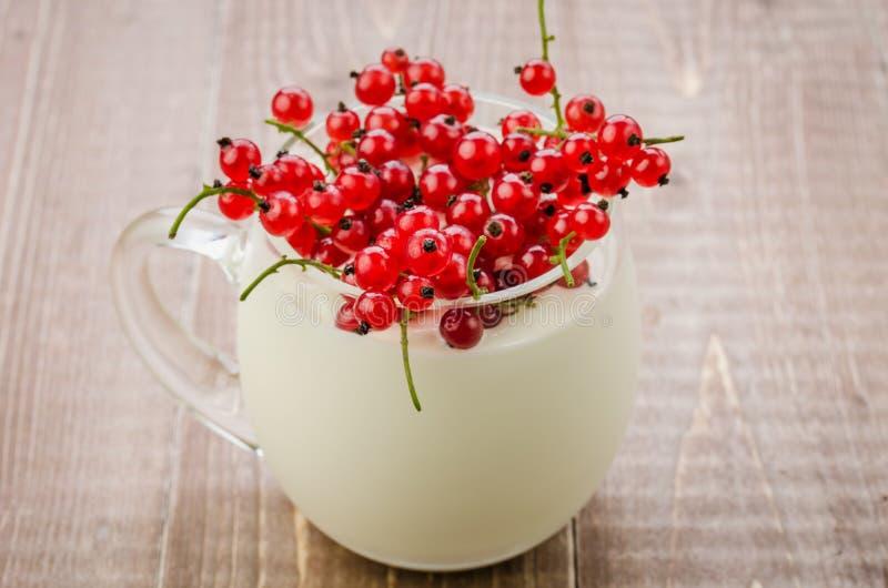 Йогурт с красной смородиной в стеклянном/йогурте с красной смородиной в glas стоковые фотографии rf