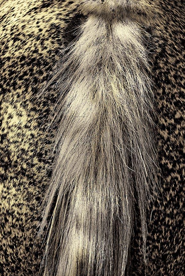 кабель лошади s стоковое фото