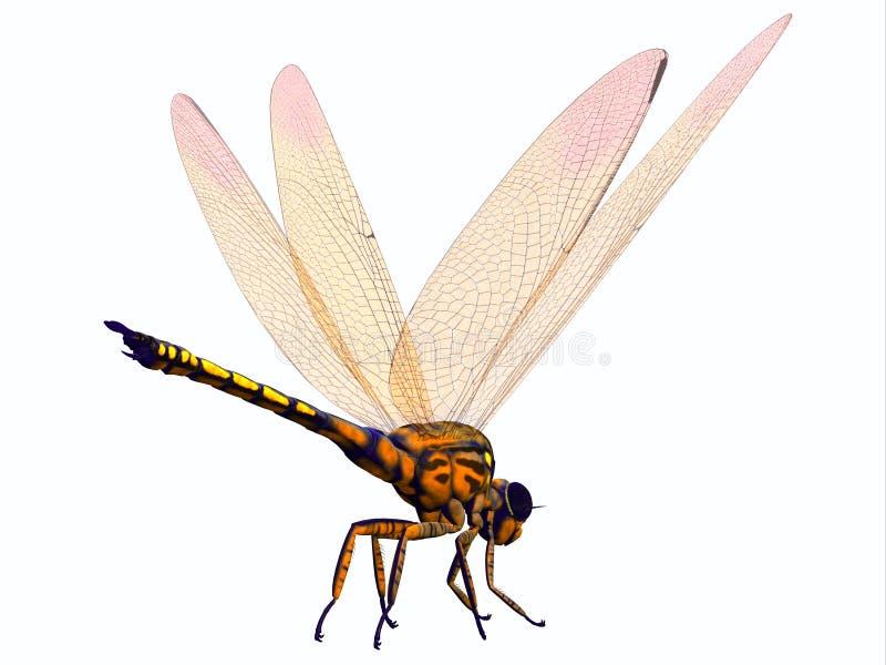 Кабель Dragonfly Meganeura бесплатная иллюстрация