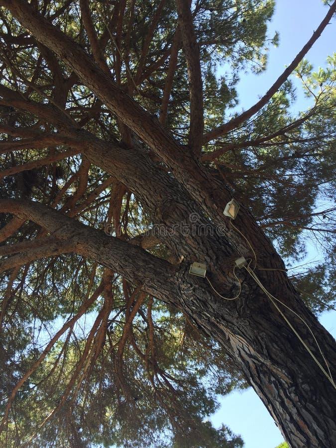 Кабели электричества на дереве стоковое фото