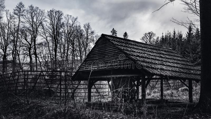 Кабина в древесинах стоковые фото