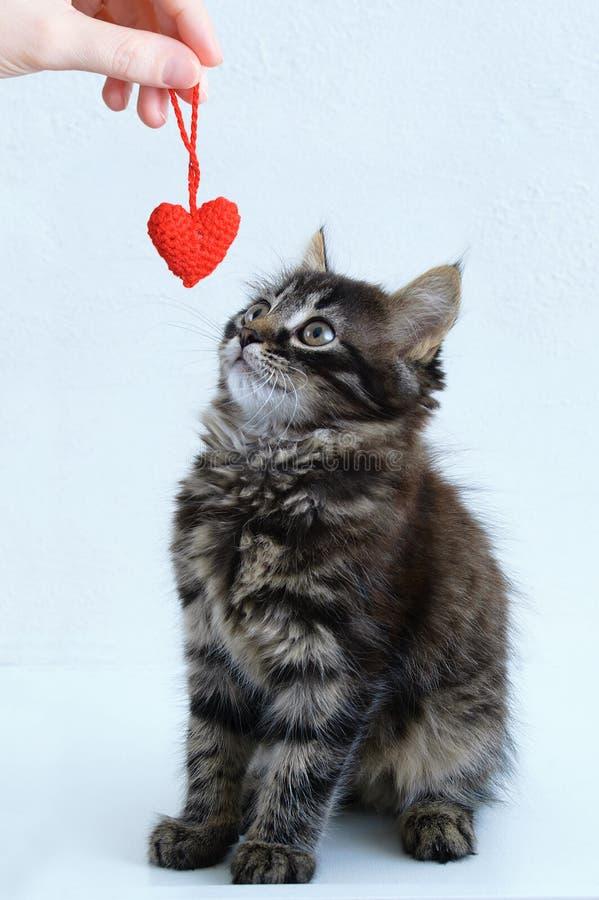 Кавказская девушка играет с котенком Сплетенное игрушечное сердце в руке стоковая фотография rf