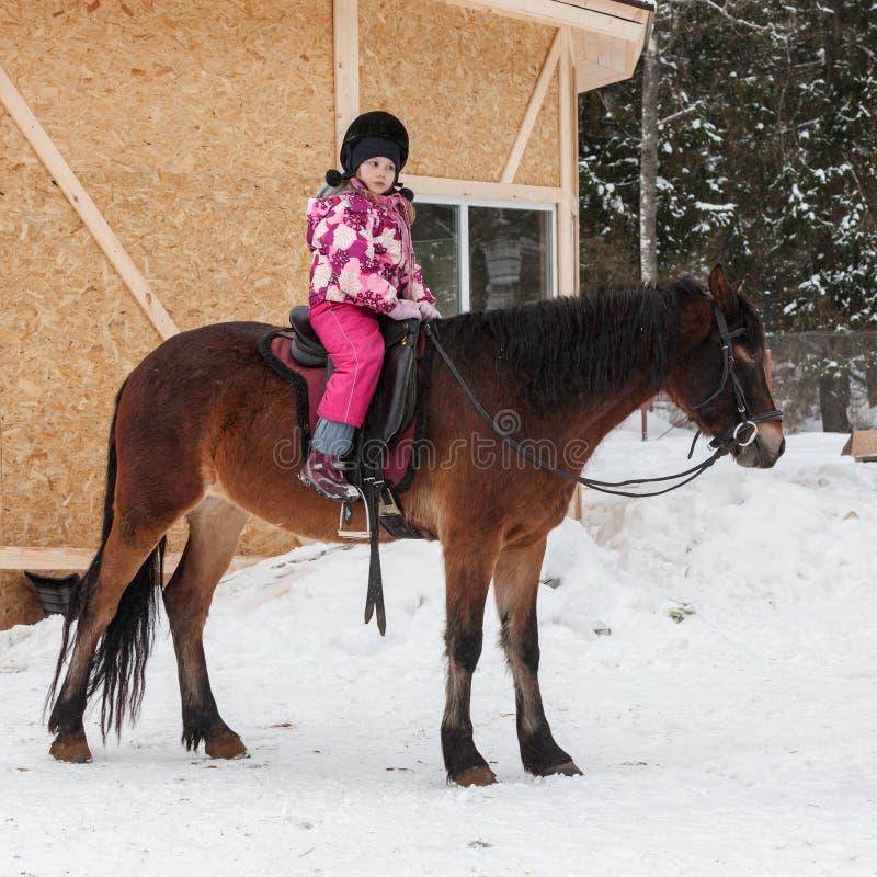 Кавказская маленькая девочка с коричневой лошадью стоковое изображение rf