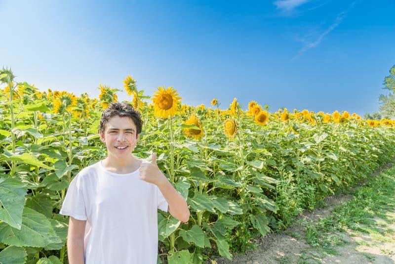 Кавказский мальчик делая большие пальцы руки вверх на солнцецвете fields стоковое изображение rf