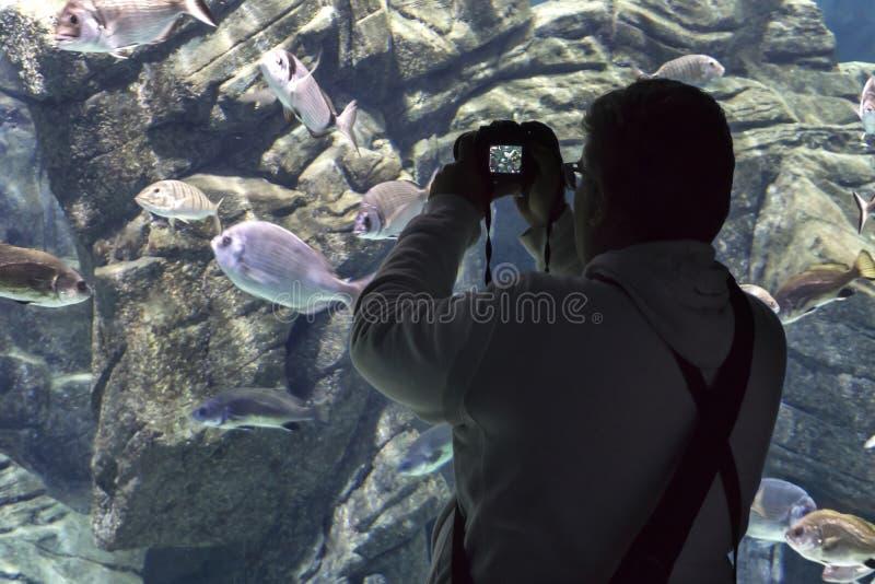 """Кавказский мужской турист держа цифровую фотокамеру принимает фото различных видов рыб на """"Cretaquarium """"в городе ираклиона стоковое изображение"""