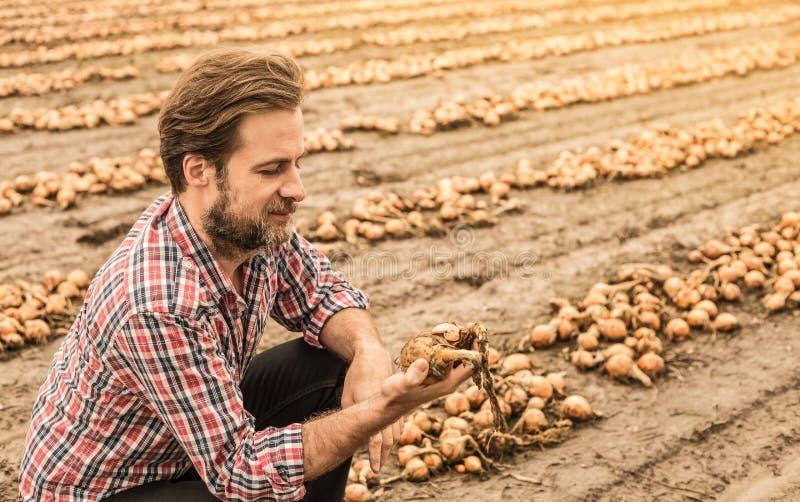 Кавказский фермер в поле лука управлением рубашки шотландки стоковые изображения rf
