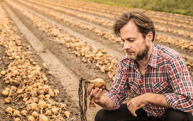 Кавказский фермер в поле лука управлением рубашки шотландки стоковая фотография rf