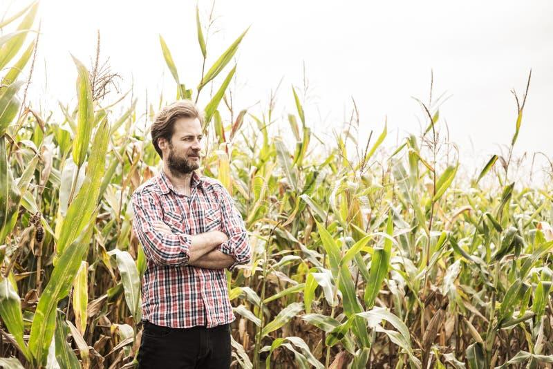 Кавказский фермер в рубашке шотландки и кукурузном поле - земледелии стоковое изображение rf