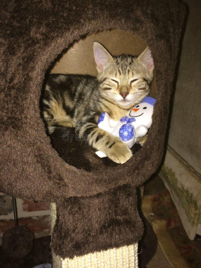 Каждый к вашему Cubby! Кот Addie представляет с куклой стоковые изображения