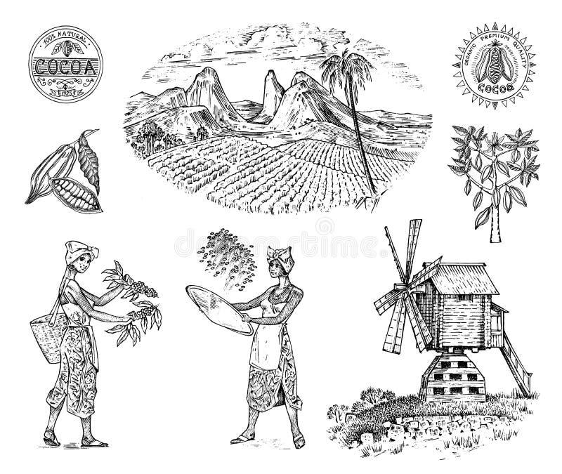 Какао или кофейная плантация Винтажная ферма и ландшафт с горами, женщинами жмут, ветрянка для значка логотипа ярлыка иллюстрация вектора