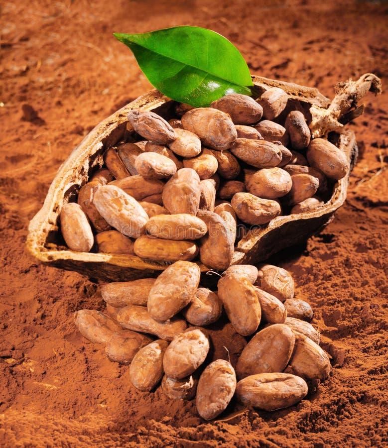 какао фасолей стоковые изображения