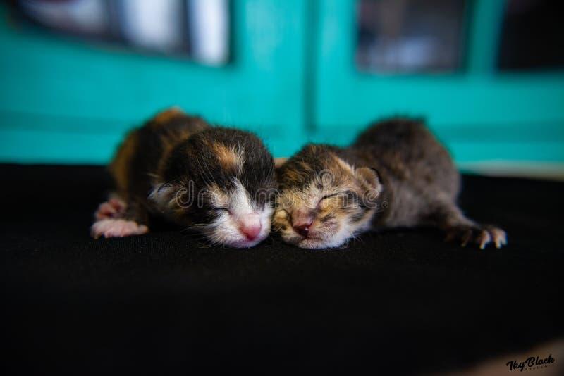 Какой милый котенок новорожденного спать совместно, 30-ое мая 2019, 09:03 до полудня стоковое изображение rf