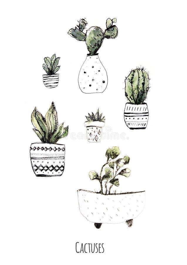 Кактусы акварели Предпосылка цветка кактусов Современная деревенская домашняя карточка искусства для дизайна печати Комплект succ бесплатная иллюстрация