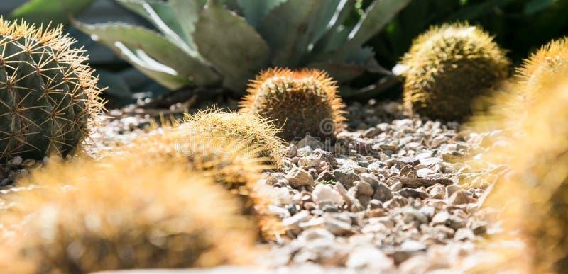 Кактусы в саде пустыни ботаническом стоковое фото rf