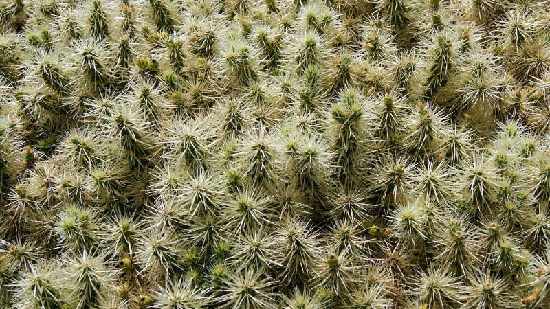 Кактусы имеют много колючки стоковое фото rf